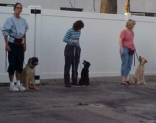Angelcare Animal Hospital & Pet Resort - Racine, WI - Canine Good Citizen Class